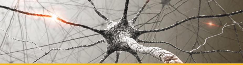 Bitcoin-Knoten - Nervenzelle